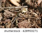 a nest of baby snakes in the... | Shutterstock . vector #628903271