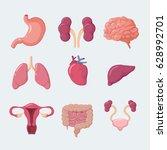 human internal organs | Shutterstock .eps vector #628992701