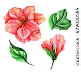 watercolor set of vintage...   Shutterstock . vector #629020589