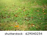Small photo of Fade leafs falling in the grass