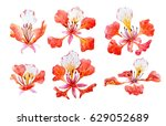 watercolor tropical flower set ... | Shutterstock . vector #629052689