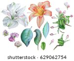 set with flowers. lily.... | Shutterstock . vector #629062754