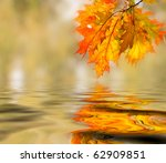 Bright Colored Leaves On The...