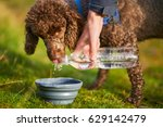 A Dog Receiving A Drink Of...