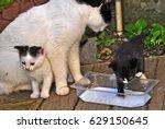Stock photo cat and kitten 629150645