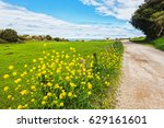 road passiing by a field of... | Shutterstock . vector #629161601