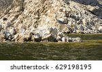 heron on rocky  | Shutterstock . vector #629198195