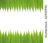 green leaves border isolated on ... | Shutterstock . vector #62920990