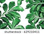 botanical leaves pattern green...   Shutterstock . vector #629210411