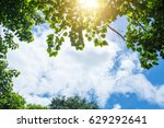 forest trees nature green wood... | Shutterstock . vector #629292641