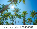 Tropical Palm Trees Over Clear...