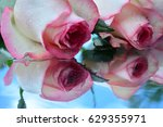 beautiful roses reflected in... | Shutterstock . vector #629355971