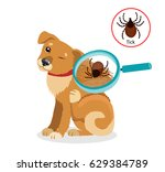 dog parasites. tick on cat in... | Shutterstock .eps vector #629384789