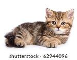 Stock photo british kittens on white backgrounds 62944096