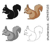 squirrel is a forest animal.... | Shutterstock .eps vector #629459105