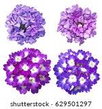 Set Of Purple Blue  Verbena...