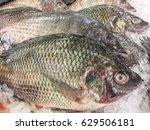Nile Tilapia Fish Fresh In Ice...
