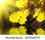 Dry Yellow Oak Leaves Over Water