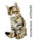 Stock photo siberian kitten isolated on the white background 62956285