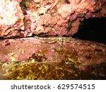 A Small Crab Hides Between...