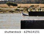 Seagull. A Single Seagull...