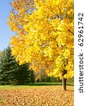 Autumn. Sunny Day in the Park. Maple tree with yellow leaves. - stock photo