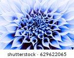 dahlia flower macro shot.... | Shutterstock . vector #629622065