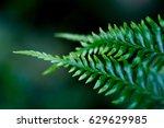 fern leave macro shot. | Shutterstock . vector #629629985