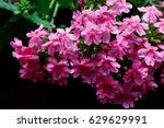 little pink flower. | Shutterstock . vector #629629991