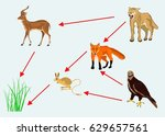 food chain vector illustration  | Shutterstock .eps vector #629657561