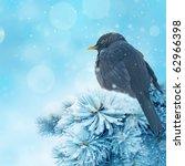 Blackbird In Winter Time