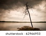 Landscape with dead tree in the lake - stock photo