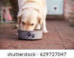 Stock photo labrador eating from dog bowl 629727047