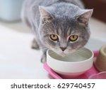 scottish fold cat breeders are... | Shutterstock . vector #629740457