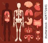 human organs skeletal | Shutterstock .eps vector #629772641