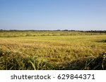 field of wheat after harvest | Shutterstock . vector #629844371