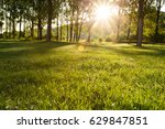 sun beams in the forest   | Shutterstock . vector #629847851