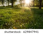 sun beams in the forest   | Shutterstock . vector #629847941