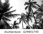 Palm Tree Leafs White And Blac...
