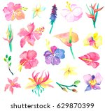 watercolor floral collection.... | Shutterstock . vector #629870399