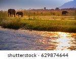 elephants in lower zambezi... | Shutterstock . vector #629874644