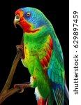 portrait red lored amazon... | Shutterstock . vector #629897459