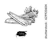 celery stick hand drawn vector...   Shutterstock .eps vector #629920604