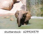 Small photo of Elephant bathing portrayed abreast with waterfall of bottom