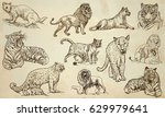 big cats around the world... | Shutterstock .eps vector #629979641