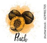 vector illustration  a peach in ... | Shutterstock .eps vector #629981705