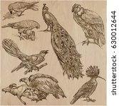 birds around the world....   Shutterstock .eps vector #630012644