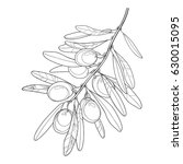 vector bunch with outline olive ... | Shutterstock .eps vector #630015095