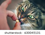 beautiful face cat girl with... | Shutterstock . vector #630045131