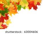beautiful autumn maple leaves... | Shutterstock . vector #63004606